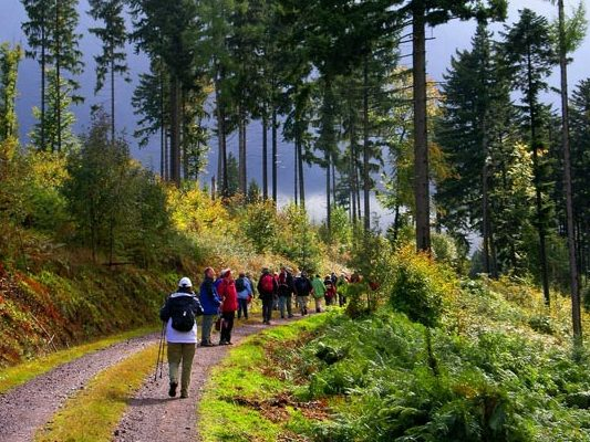 The Black Forest Germany >> Black Forest Schwarzwald Germany Exceptionally Beautiful